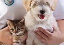 dog-cat2